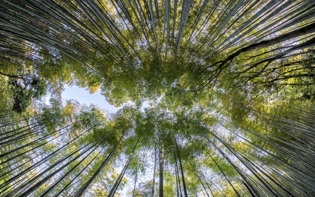 El cuento del bambú japonés, ideal para reflexionar sobre la paciencia y la perseverancia